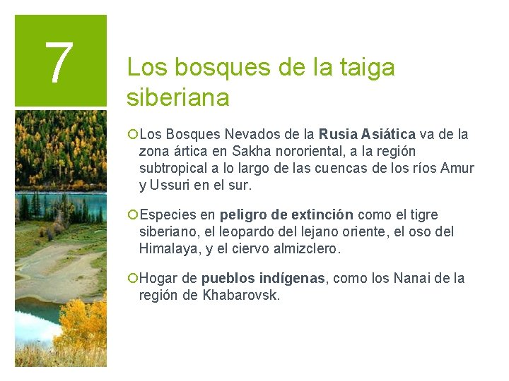 7 Los bosques de la taiga siberiana ¡Los Bosques Nevados de la Rusia Asiática