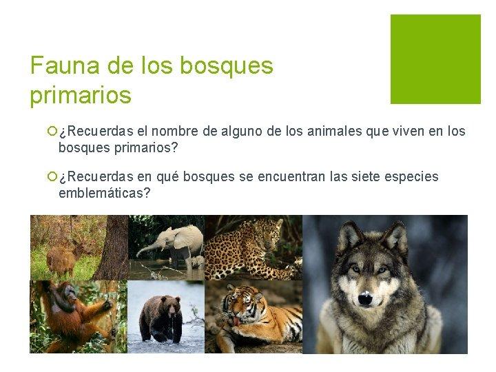 Fauna de los bosques primarios ¡¿Recuerdas el nombre de alguno de los animales que