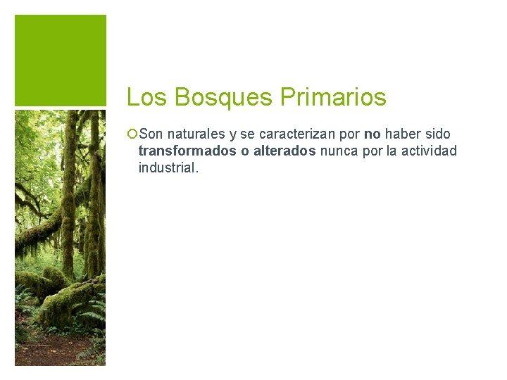 Los Bosques Primarios ¡Son naturales y se caracterizan por no haber sido transformados o