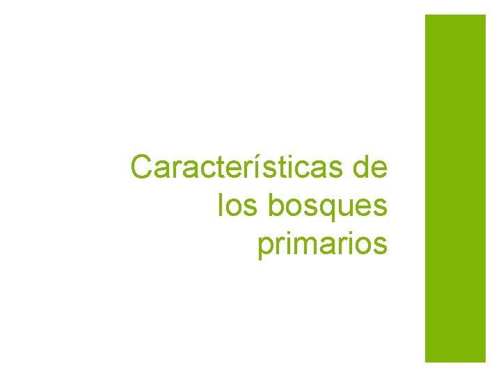 Características de los bosques primarios