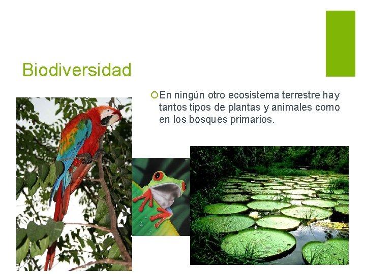 Biodiversidad ¡En ningún otro ecosistema terrestre hay tantos tipos de plantas y animales como