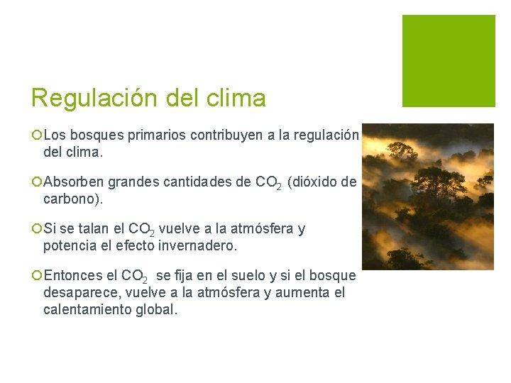 Regulación del clima ¡Los bosques primarios contribuyen a la regulación del clima. ¡Absorben grandes