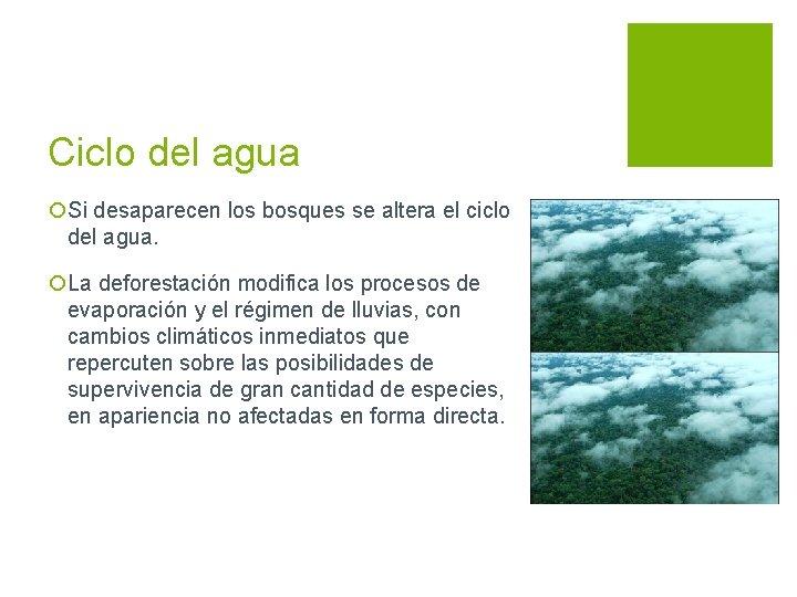Ciclo del agua ¡Si desaparecen los bosques se altera el ciclo del agua. ¡La