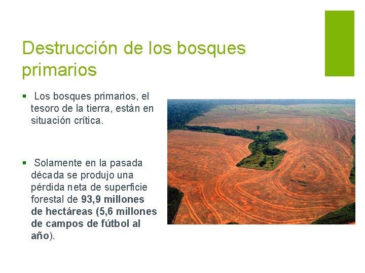 Destrucción de los bosques primarios § Los bosques primarios, el tesoro de la tierra,