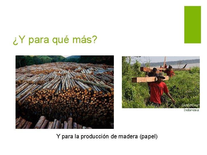 ¿Y para qué más? Y para la producción de madera (papel)
