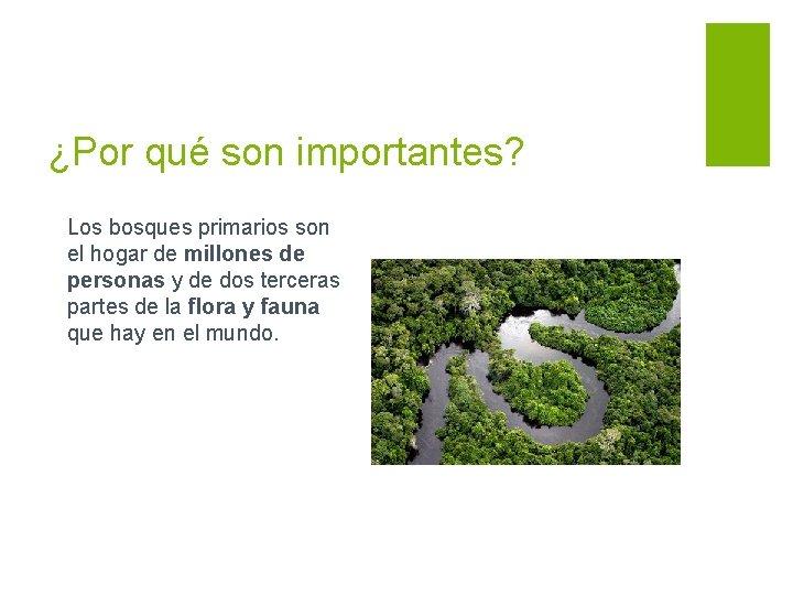¿Por qué son importantes? Los bosques primarios son el hogar de millones de personas