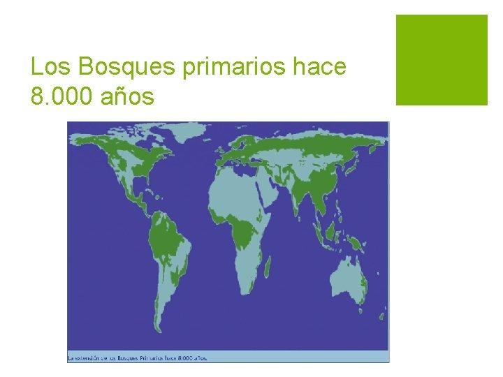 Los Bosques primarios hace 8. 000 años