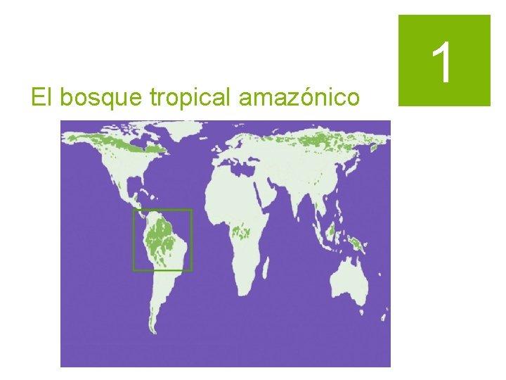 El bosque tropical amazónico 1