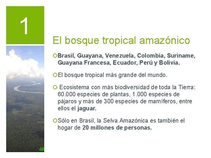 1 El bosque tropical amazónico ¡Brasil, Guayana, Venezuela, Colombia, Suriname, Guayana Francesa, Ecuador, Perú