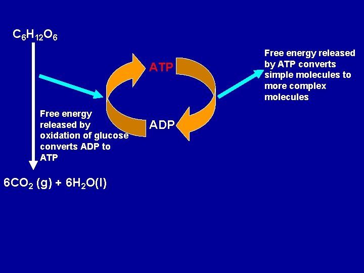 C 6 H 12 O 6 ATP Free energy released by oxidation of glucose