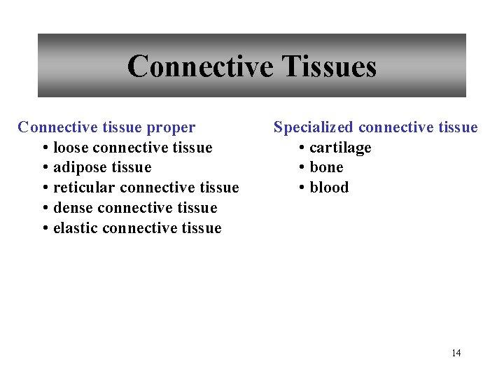 Connective Tissues Connective tissue proper • loose connective tissue • adipose tissue • reticular