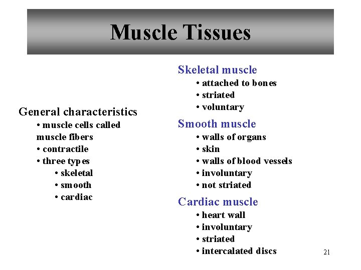 Muscle Tissues Skeletal muscle General characteristics • muscle cells called muscle fibers • contractile
