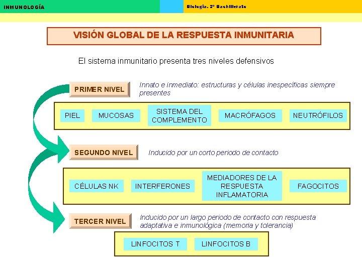 Biología. 2º Bachillerato INMUNOLOGÍA VISIÓN GLOBAL DE LA RESPUESTA INMUNITARIA El sistema inmunitario presenta