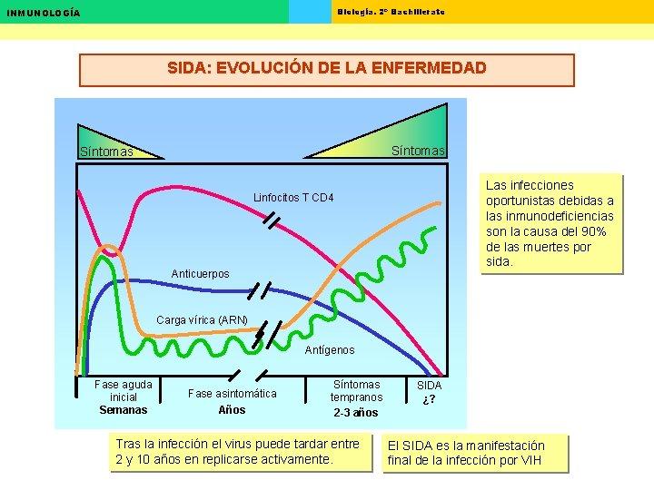 Biología. 2º Bachillerato INMUNOLOGÍA SIDA: EVOLUCIÓN DE LA ENFERMEDAD Síntomas Las infecciones oportunistas debidas