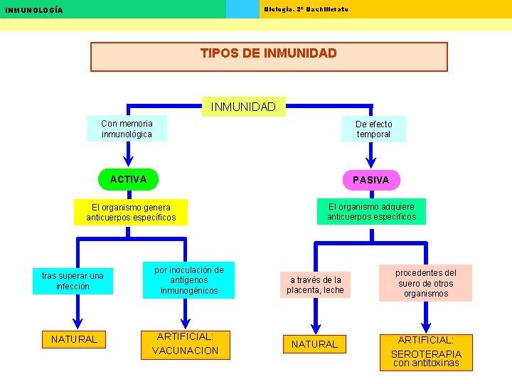 Biología. 2º Bachillerato INMUNOLOGÍA TIPOS DE INMUNIDAD Con memoria inmunológica De efecto temporal ACTIVA