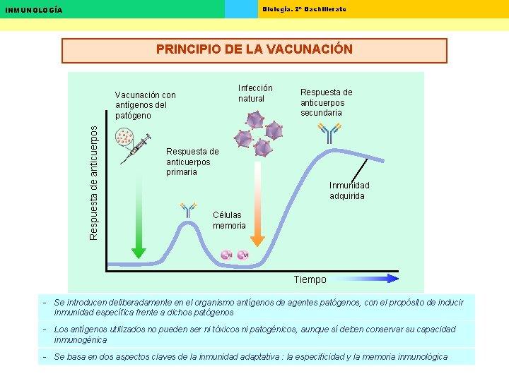 Biología. 2º Bachillerato INMUNOLOGÍA PRINCIPIO DE LA VACUNACIÓN Infección natural Respuesta de anticuerpos Vacunación