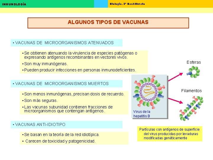 Biología. 2º Bachillerato INMUNOLOGÍA ALGUNOS TIPOS DE VACUNAS • VACUNAS DE MICROORGANISMOS ATENUADOS •