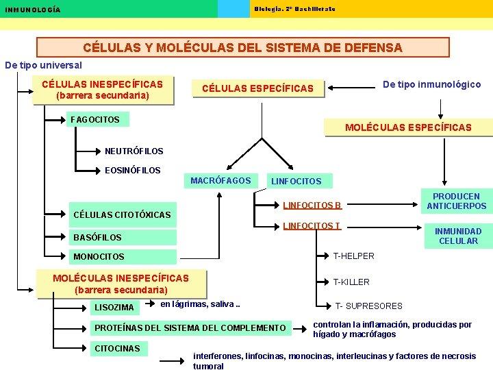 Biología. 2º Bachillerato INMUNOLOGÍA CÉLULAS Y MOLÉCULAS DEL SISTEMA DE DEFENSA De tipo universal