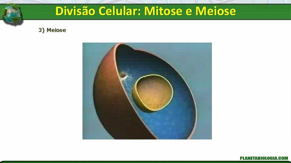 Divisão Celular: Mitose e Meiose 3) Meiose