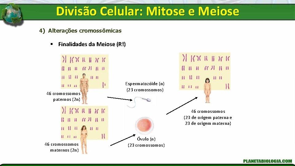 Divisão Celular: Mitose e Meiose 4) Alterações cromossômicas § Finalidades da Meiose (R!) 46