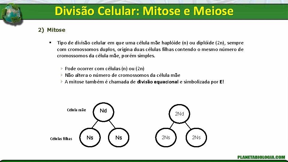 Divisão Celular: Mitose e Meiose 2) Mitose § Tipo de divisão celular em que