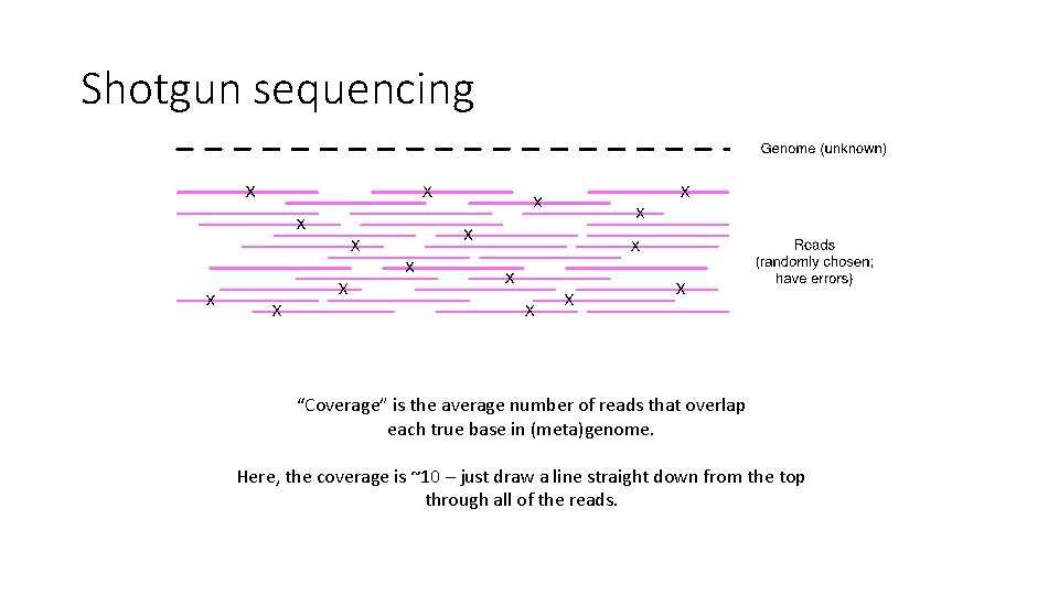 """Shotgun sequencing """"Coverage"""" is the average number of reads that overlap each true base"""
