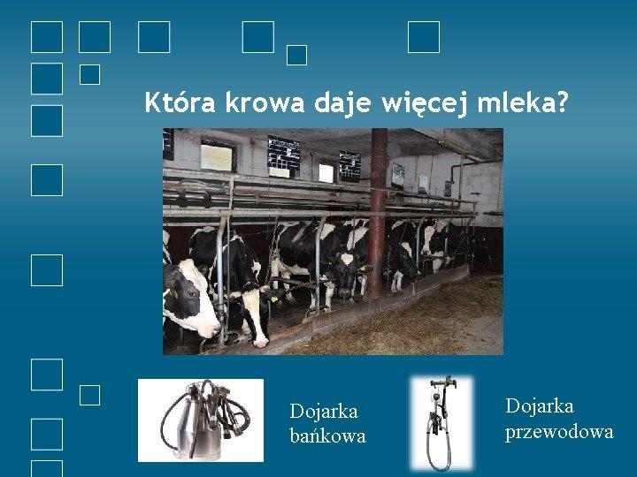 Która krowa daje więcej mleka? Dojarka bańkowa Dojarka przewodowa
