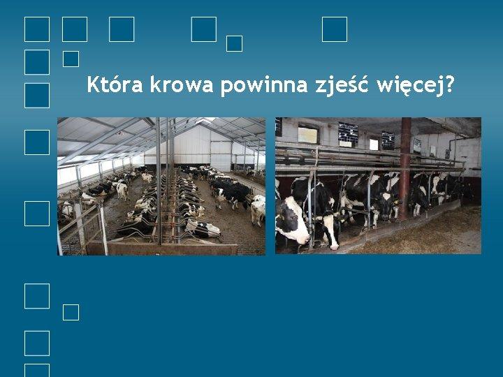 Która krowa powinna zjeść więcej?