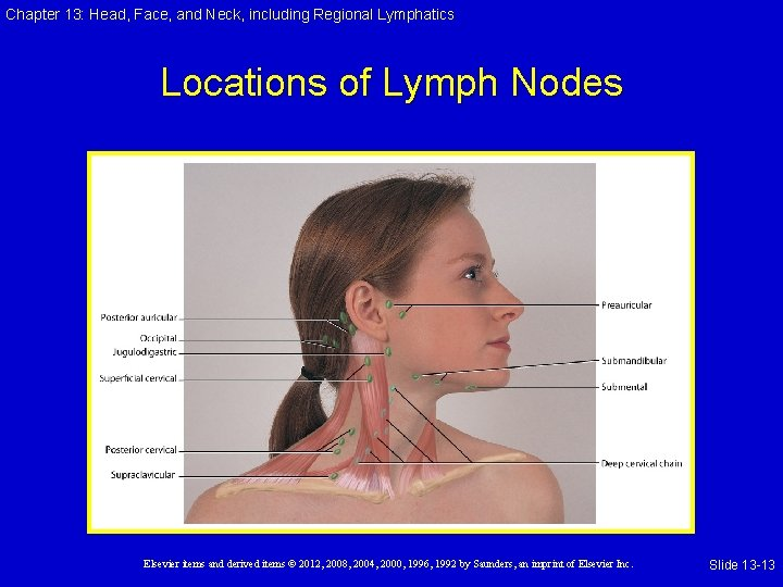 Chapter 13: Head, Face, and Neck, including Regional Lymphatics Locations of Lymph Nodes Elsevier