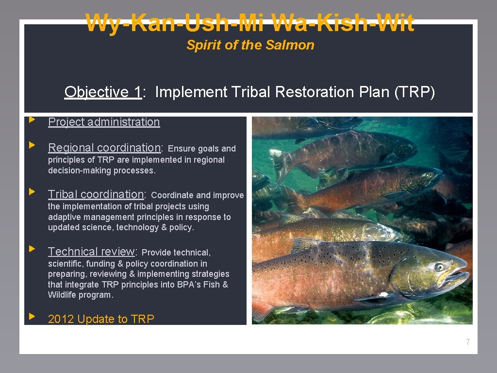 Wy-Kan-Ush-Mi Wa-Kish-Wit Spirit of the Salmon Objective 1: Implement Tribal Restoration Plan (TRP) Project