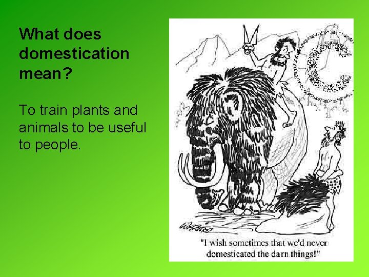 What does domestication mean? To train plants and animals to be useful to people.