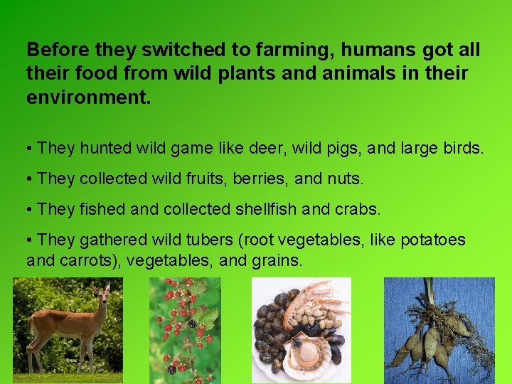 Before they switched to farming, humans got all their food from wild plants and