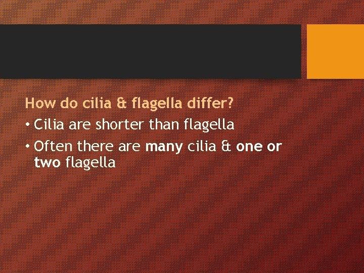 How do cilia & flagella differ? • Cilia are shorter than flagella • Often