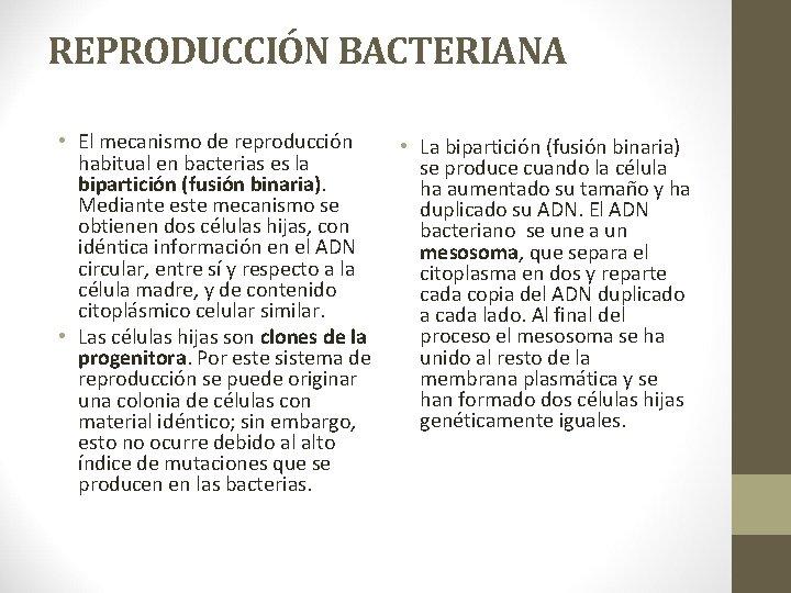 REPRODUCCIÓN BACTERIANA • El mecanismo de reproducción habitual en bacterias es la bipartición (fusión