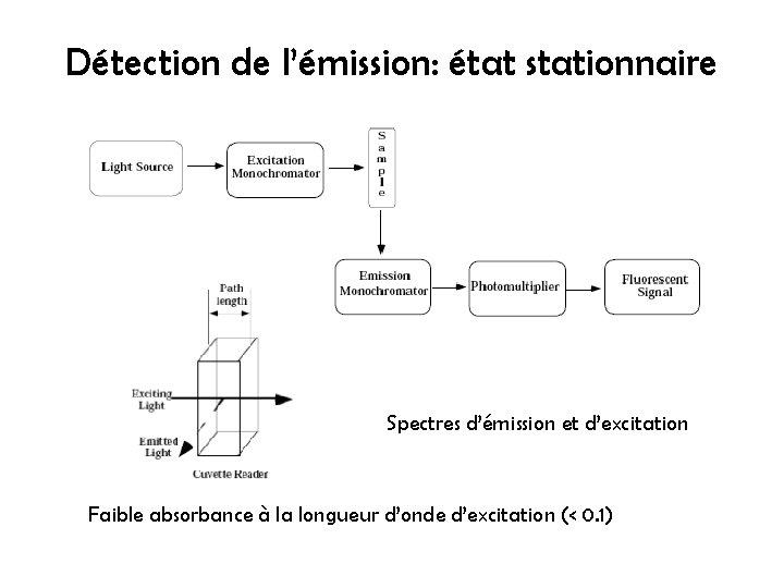 Détection de l'émission: état stationnaire Spectres d'émission et d'excitation Faible absorbance à la longueur