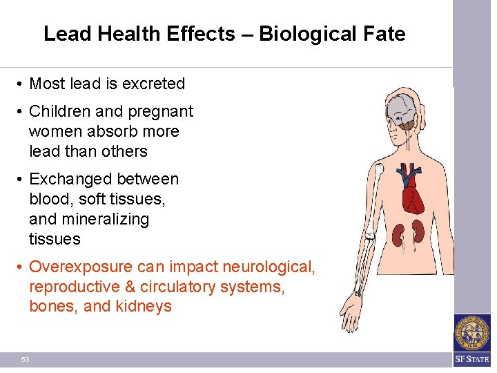Lead Health Effects – Biological Fate • Most lead is excreted • Children and