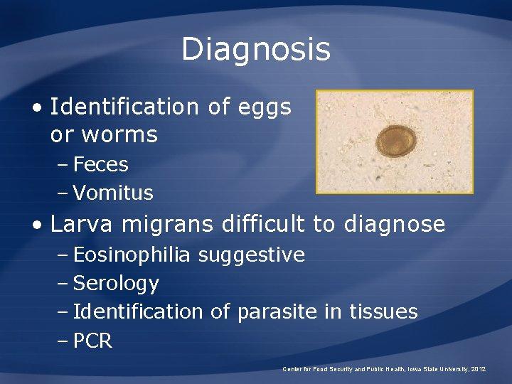 Diagnosis • Identification of eggs or worms – Feces – Vomitus • Larva migrans