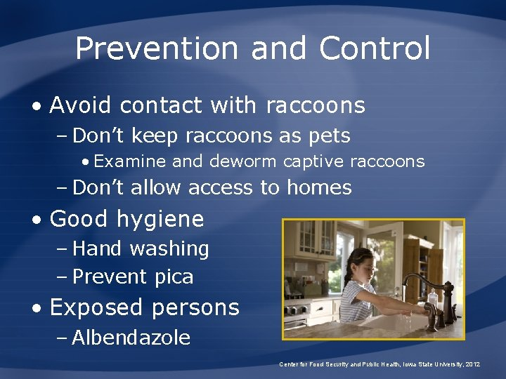 Prevention and Control • Avoid contact with raccoons – Don't keep raccoons as pets