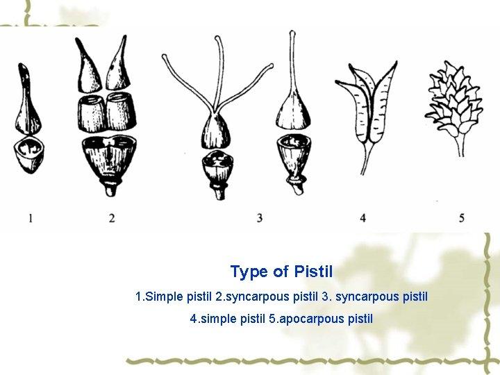Type of Pistil 1. Simple pistil 2. syncarpous pistil 3. syncarpous pistil 4. simple