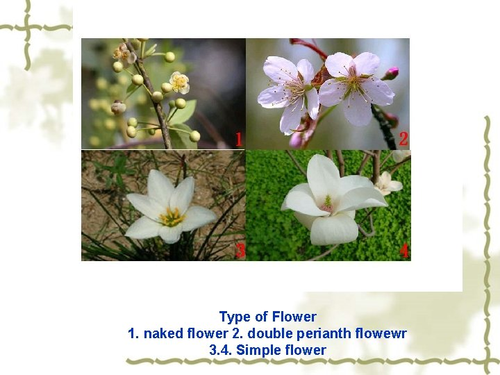 Type of Flower 1. naked flower 2. double perianth flowewr 3. 4. Simple flower