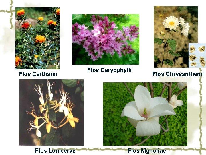 Flos Carthami Flos Lonicerae Flos Caryophylli Flos Chrysanthemi Flos Mgnoliae