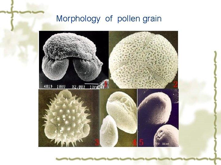 Morphology of pollen grain