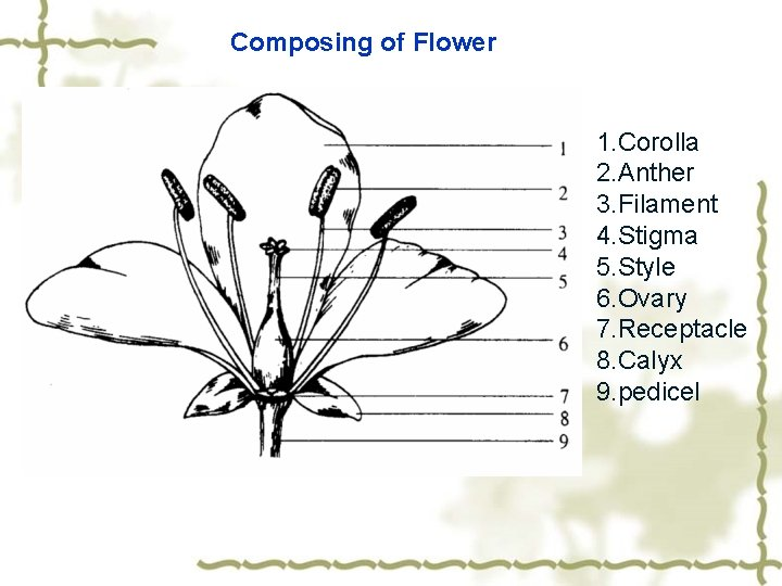 Composing of Flower 1. Corolla 2. Anther 3. Filament 4. Stigma 5. Style 6.