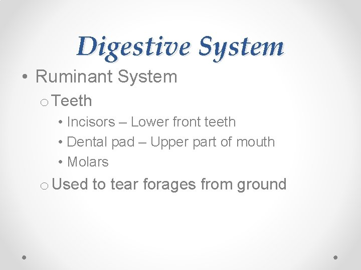 Digestive System • Ruminant System o Teeth • Incisors – Lower front teeth •