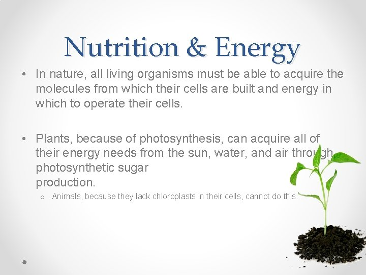 Nutrition & Energy • In nature, all living organisms must be able to acquire
