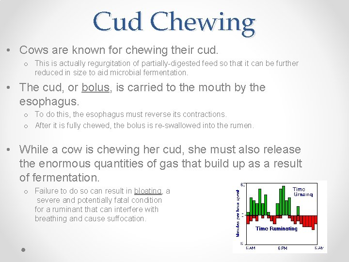 Cud Chewing • Cows are known for chewing their cud. o This is actually