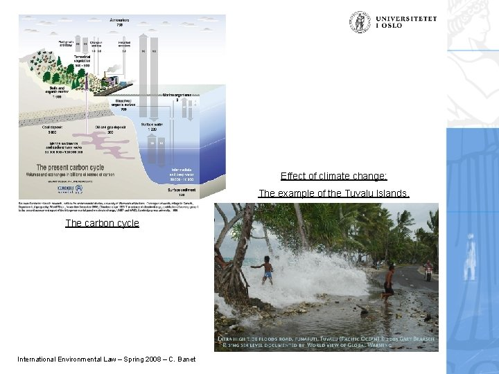 Effect of climate change: The example of the Tuvalu Islands. The carbon cycle International