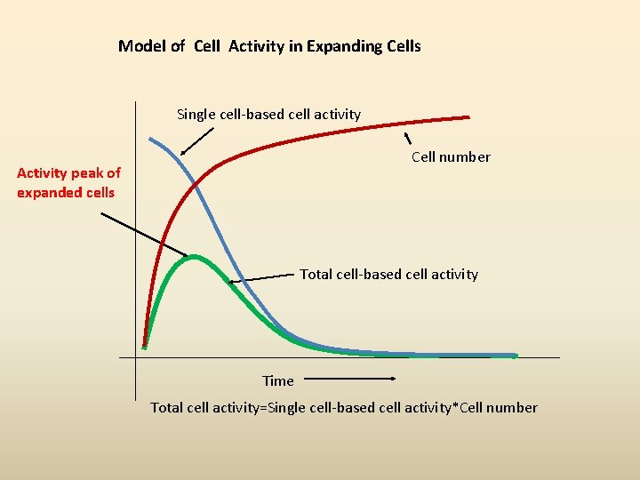 Model of Cell Activity in Expanding Cells Single cell-based cell activity Cell number Activity