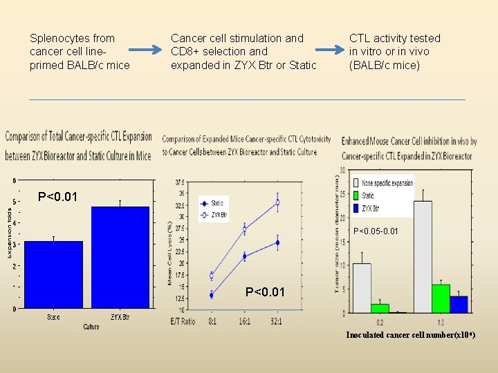 Splenocytes from cancer cell lineprimed BALB/c mice Cancer cell stimulation and CD 8+ selection