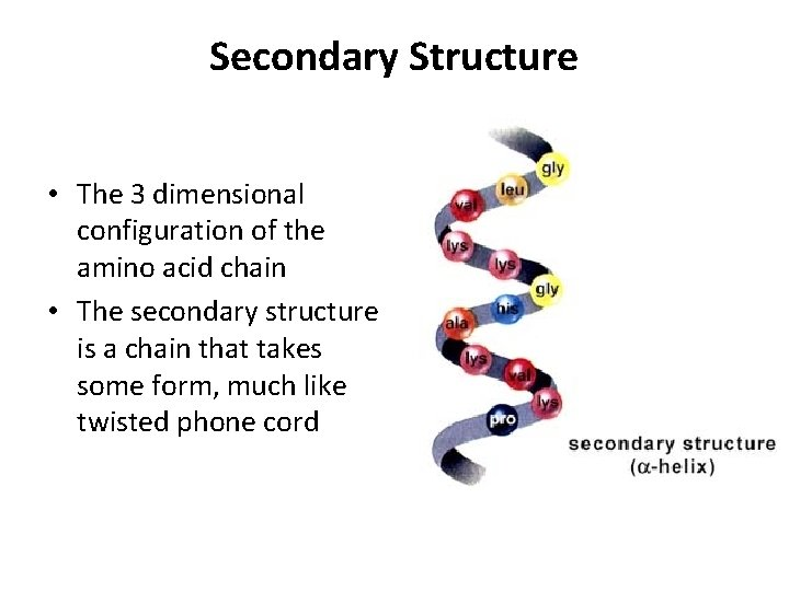 Secondary Structure • The 3 dimensional configuration of the amino acid chain • The